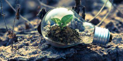 bulb, green, leaf, esg