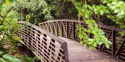 bridge-nature-summer-landscape-forest-pathway