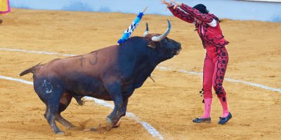 cattle-bull-sports-performance-bullring-event-1388233-pxhere.com