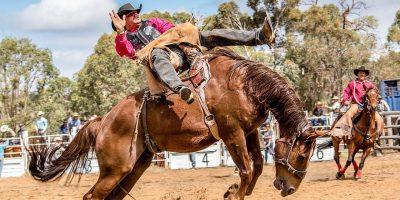1280px-Boddington_Rodeo_2015_(128247507)